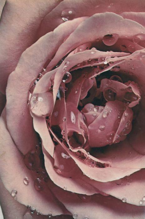 Maison francis kurkdjian a la rose beauty scenario for A la rose maison francis kurkdjian